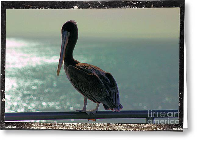 Surf City Greeting Cards - Pete the Pelican Greeting Card by RJ Aguilar