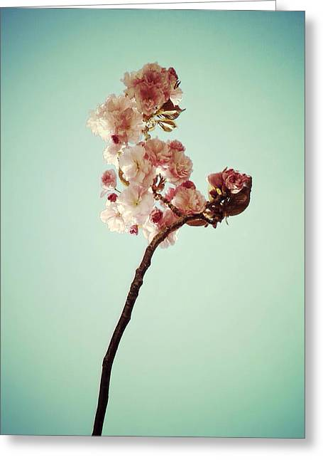 Prospects Greeting Cards - Petite Spring Greeting Card by Natasha Marco
