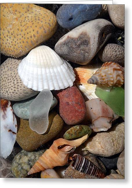 Fossilized Shell Greeting Cards - Petoskey Stones lV Greeting Card by Michelle Calkins