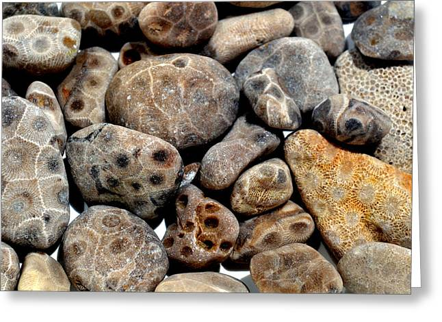 Stones Greeting Cards - Petoskey Stones Vl Greeting Card by Michelle Calkins