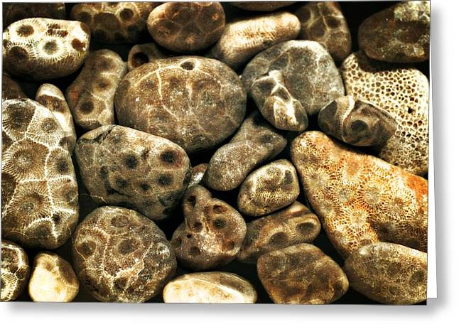 Beach Stones. Colorful Rocks Greeting Cards - Petoskey Stones Vlll Greeting Card by Michelle Calkins