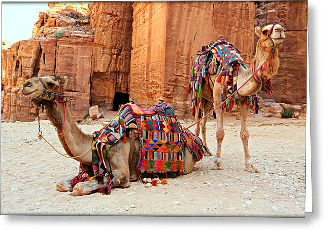 Caves Greeting Cards - Petra Camels Greeting Card by Stephen Stookey