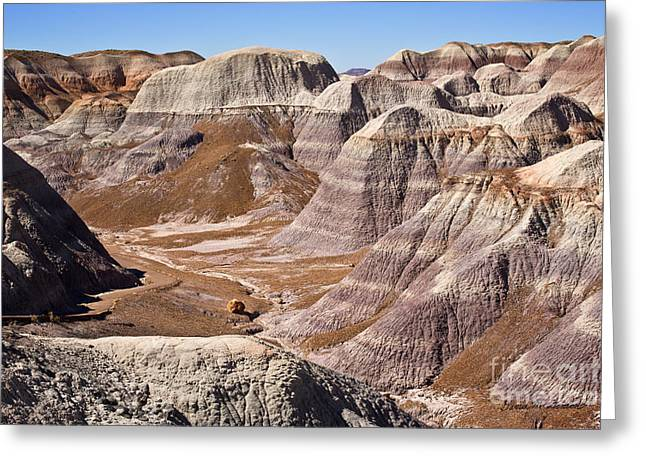 Petrified Forest Greeting Cards - Petrified Forest I Greeting Card by David Gordon