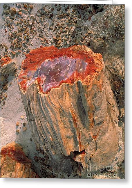 Petrified Forest Greeting Cards - Petrified Log Greeting Card by George Ranalli
