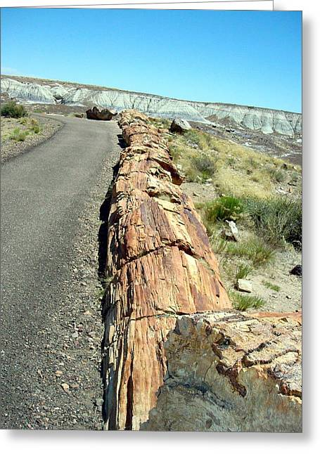 The Petrified Forest Greeting Cards - Petrified Log Greeting Card by Susan Woodward