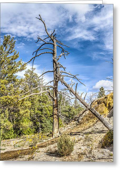 Yellowstone National Park Greeting Cards - Petrified Trees Greeting Card by Jeff Donald