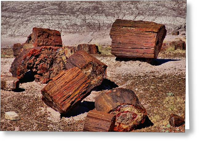 Petrified Forest Arizona Greeting Cards - Petrified Wood Greeting Card by Dan Sproul