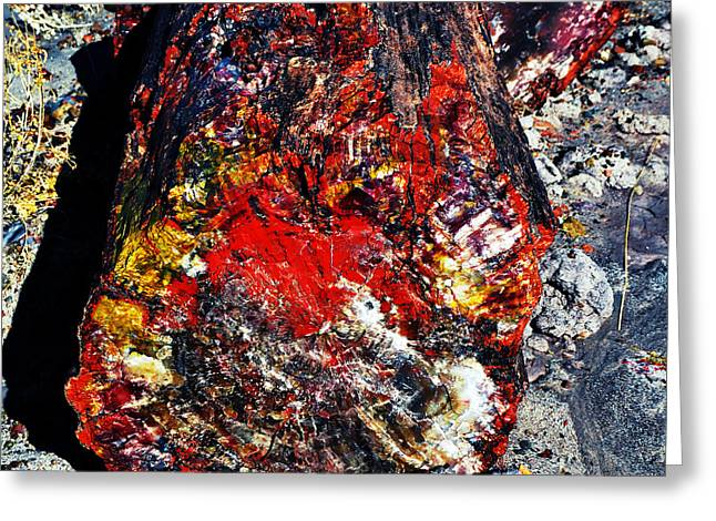 Crystals Greeting Cards - Petrified Wood Log Rainbow Crystalization at Petrified Forest National Park Square Vivid Greeting Card by Shawn O