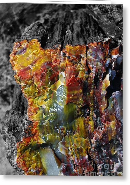 Petrified Forest Greeting Cards - Petrified Wood Macro at Petrified Forest National Park Color Splash Black and White Greeting Card by Shawn O