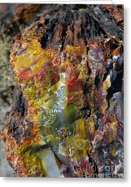 Crystals Greeting Cards - Petrified Wood Macro at Petrified Forest National Park Greeting Card by Shawn O