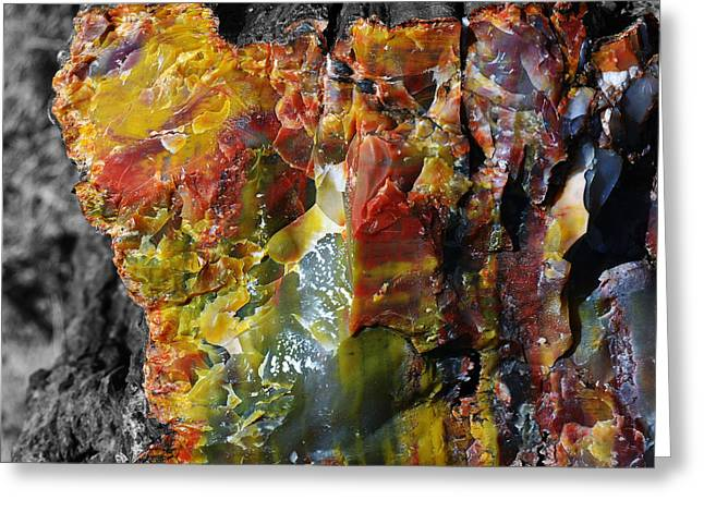 Crystals Greeting Cards - Petrified Wood Macro at Petrified Forest National Park Square Color Splash Black and White Greeting Card by Shawn O