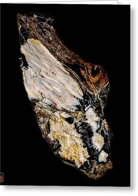 Petrified Wood Opus01 Greeting Card by Rock Hound