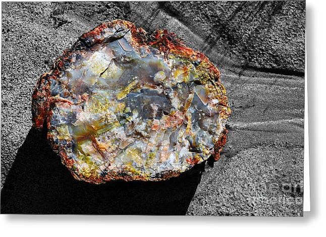 Petrified Forest Greeting Cards - Petrified Wood Rainbow Cross Section Macro at Petrified Forest National Park Color Splash   Greeting Card by Shawn O
