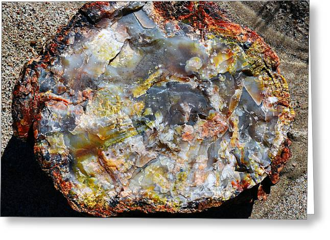 Petrified Wood Rainbow Cross Section Macro At Petrified Forest National Park Square Greeting Card by Shawn O'Brien