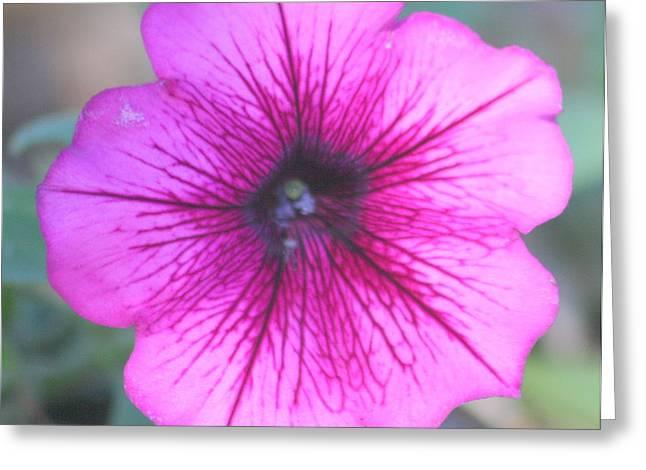 Fushia Greeting Cards - Petunia Greeting Card by LC  Linda Scott