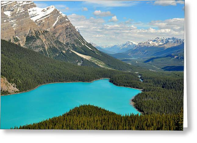 Majestic Greeting Cards - Peyto Lake Greeting Card by Lisa  Phillips