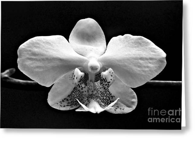 Phalaenopsis Orchid Greeting Cards - Phalaenopsis #1 - bw Greeting Card by Nikolyn McDonald