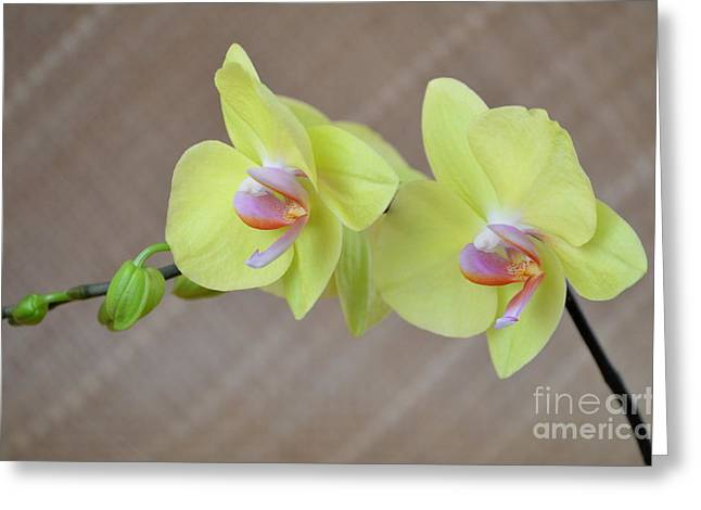 Featured Pastels Greeting Cards - Phalaenopsis Fullers Sunset Orchid on Lauhala Mat - No 4 Greeting Card by Mary Deal