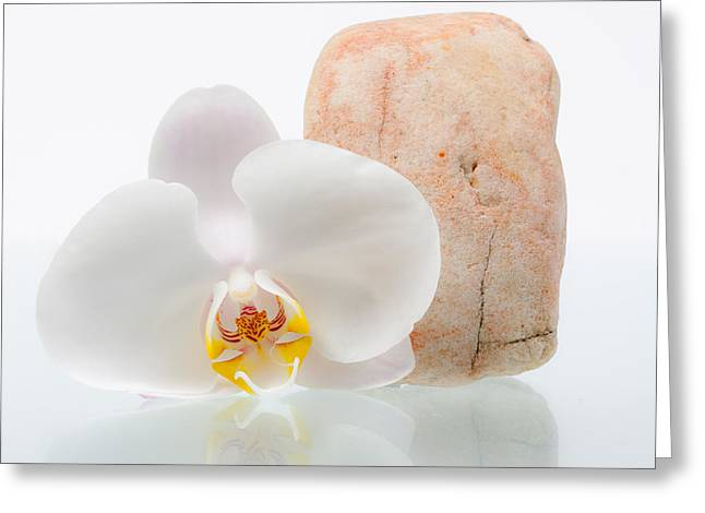 Phalenopsis Greeting Cards - Phalenopsis and Rock 51 Greeting Card by W Chris Fooshee