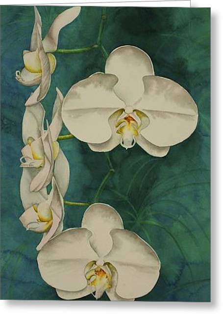 Grocery Store Greeting Cards - Phalaenopsis Beauty Greeting Card by Heather Gallup