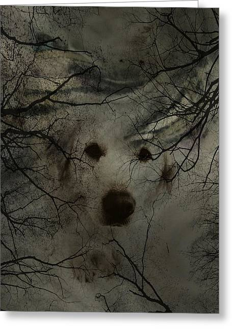 Phantom Dog Greeting Card by Shirley Sirois