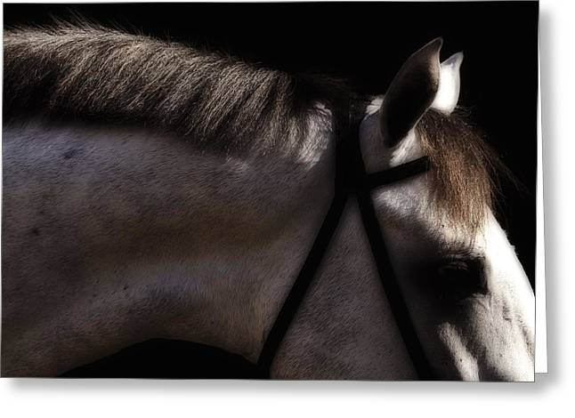 Before The Races Greeting Cards - Phantom Lovers Excitement Greeting Card by Angela Stanton