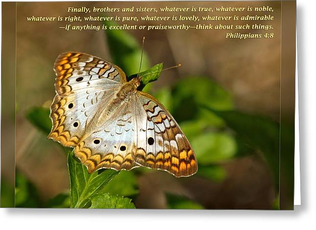 Inspirational Wildlife Prints Greeting Cards - Philippians 4 8 Greeting Card by Dawn Currie