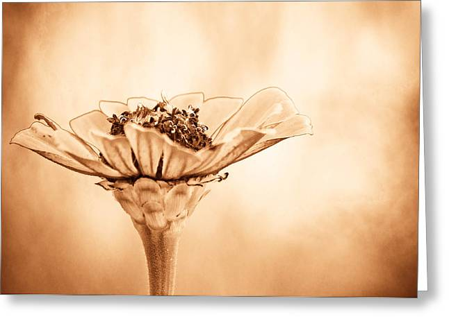 Flower Stems Greeting Cards - Phillies Need A Win Greeting Card by Trish Tritz