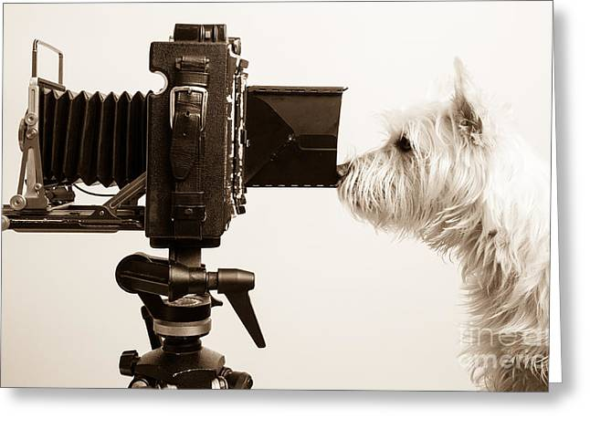 Westie Greeting Cards - Pho Dog Grapher Greeting Card by Edward Fielding