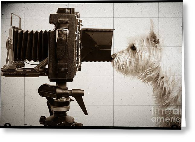 Pho Dog Grapher - Ground Glass View Greeting Card by Edward Fielding