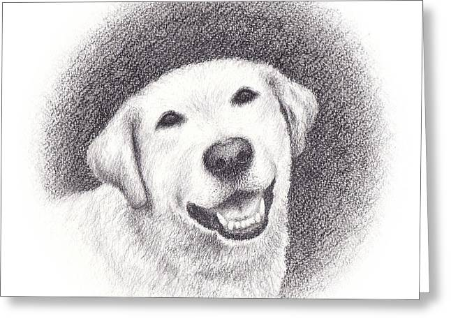 Cob Drawings Greeting Cards - Phoebe Greeting Card by Conor OBrien