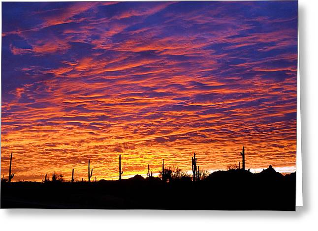 Jill Reger Greeting Cards - Phoenix Sunrise Greeting Card by Jill Reger