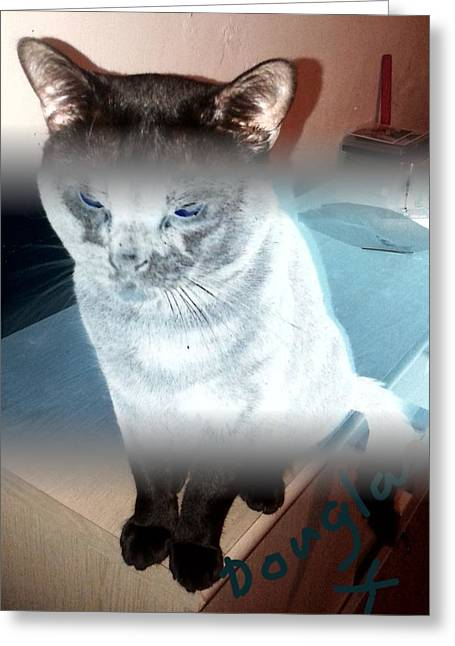 Moggy Greeting Cards - Photo Art Greeting Card by Julie Dunkley