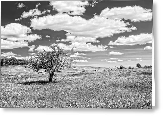 Maine Agriculture Digital Art Greeting Cards - Photo of Single Apple Tree In Maine Blueberry Field Greeting Card by Keith Webber Jr