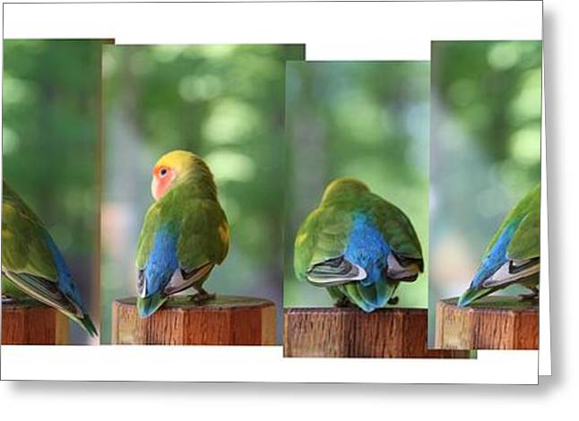Peach-faced Lovebird Greeting Cards - Photo shoot Greeting Card by  Andrea Lazar