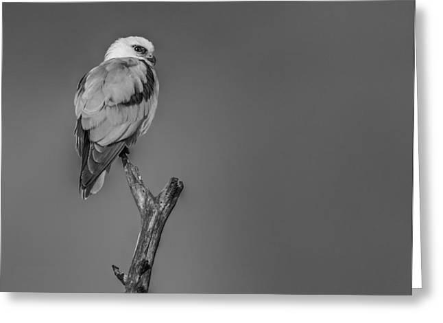 Kites Pyrography Greeting Cards - Photograph Greeting Card by Darshan Subba