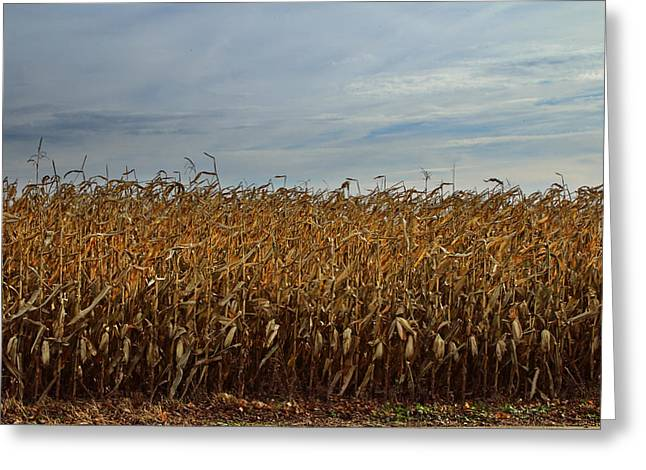 Cornfield Greeting Cards - Photograph of an Autumn Cornfield Greeting Card by Randall Nyhof