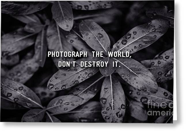 Photograph The World Don't Destroy It Greeting Card by Liesl Marelli