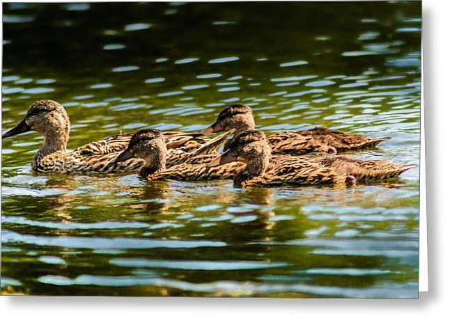 Ducklings Mixed Media Greeting Cards - Photography Painting of Mother and Her Ducklings Greeting Card by Optical Playground By MP Ray
