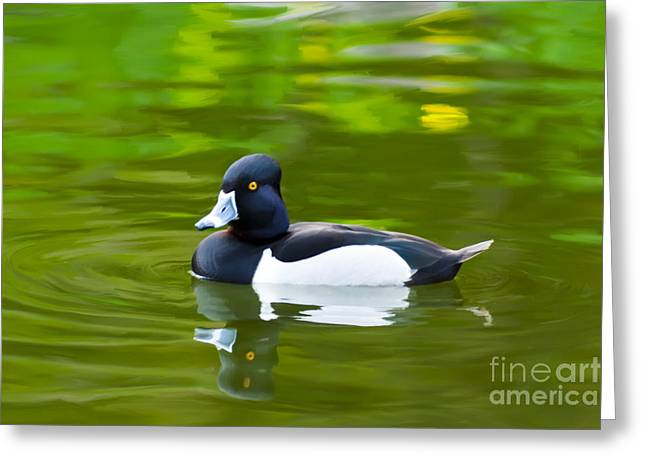 Photo-realism Mixed Media Greeting Cards - PhotoRealistic Crested Duck Greeting Card by Scott Laffin