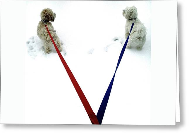 Dog Walking Digital Art Greeting Cards - Pia and Pelle Greeting Card by Natasha Marco