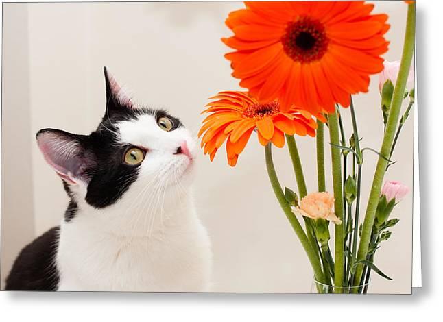 Humane Society Greeting Cards - Piaf  Greeting Card by Bing  Lei