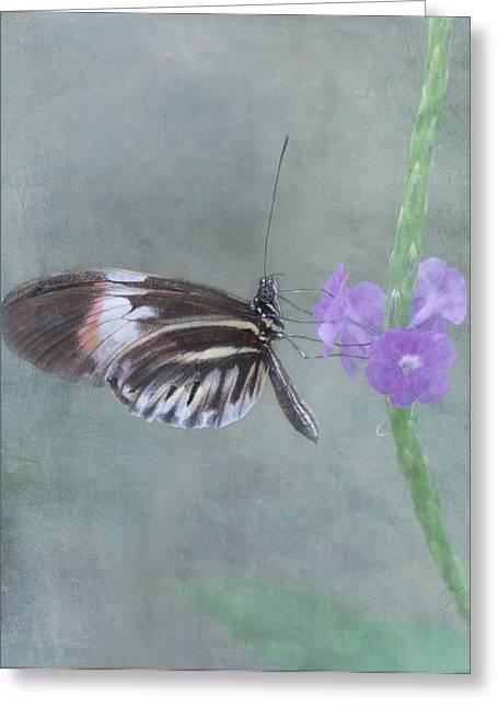 Pompano Greeting Cards - Piano Key Butterfly Greeting Card by Kim Hojnacki