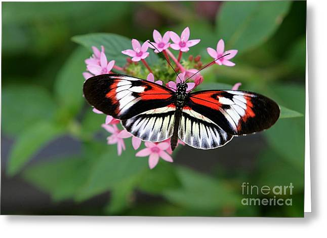 Recently Sold -  - Blooms Greeting Cards - Piano Key Butterfly on Pink Penta Greeting Card by Sabrina L Ryan