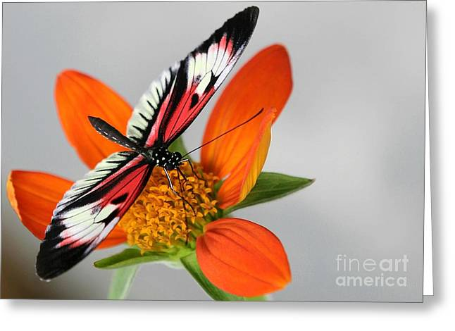 Piano Key Butterfly Up Close Greeting Card by Sabrina L Ryan