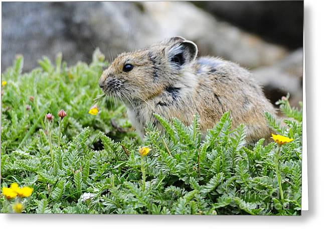 Pica Greeting Cards - Pica Eating Flower Greeting Card by Gary Beeler