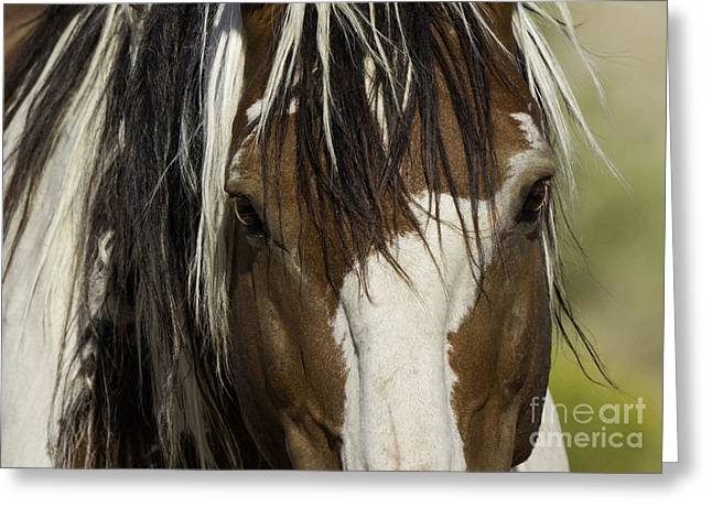 Wild Horse Greeting Cards - Picassos Eyes Greeting Card by Carol Walker