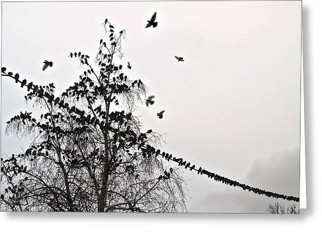 Nebbia Greeting Cards - Piccioni a Torino Greeting Card by Pierfrancesco Maria Rovere