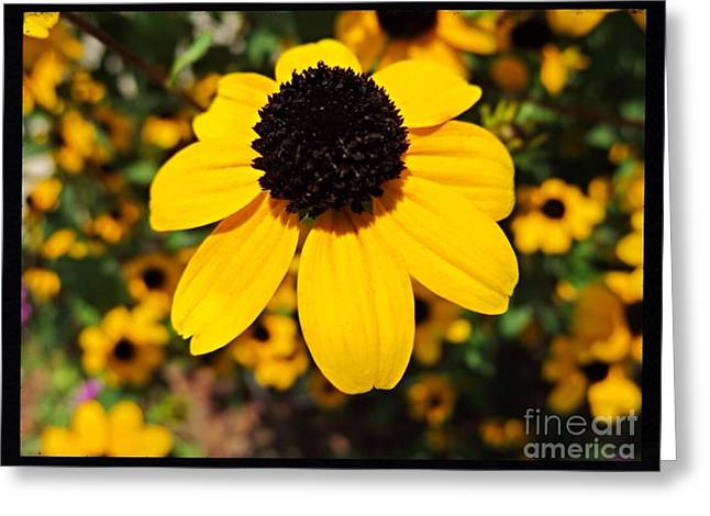 The Nature Center Greeting Cards - My Darling Sunshine Greeting Card by Kimberlee  Baxter