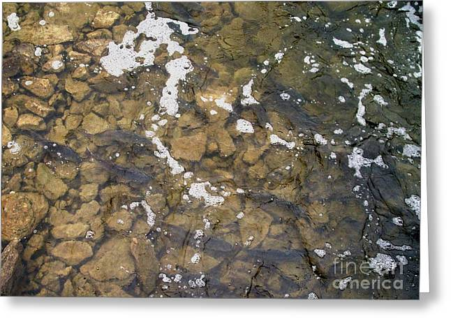Pickerel Greeting Cards - Pickerel Fish Run in Stream Greeting Card by Gail Matthews